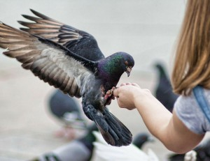 Gay čierne muža s obrovským vtáky