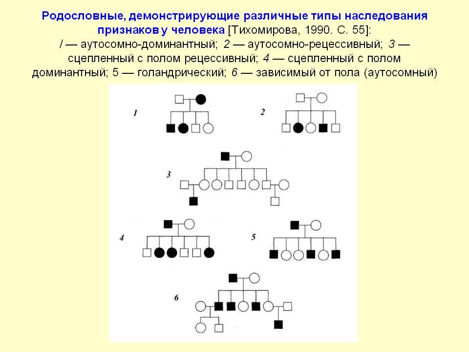 Типы наследования генетика